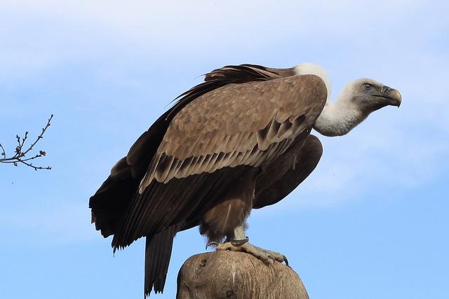 vulture-3-w640